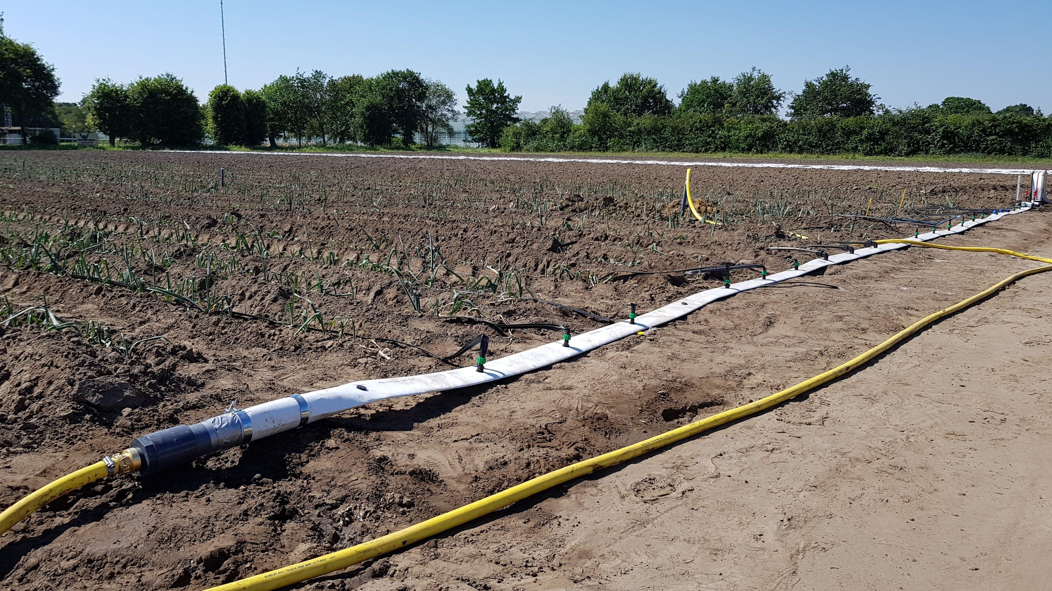 irrigatie vollegrond groenten