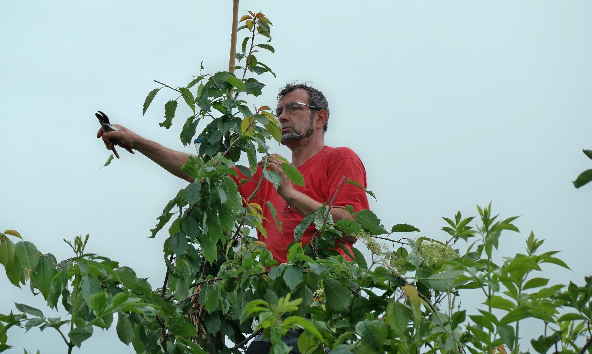 Louis-Marie snoeit zijn bomen