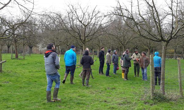 Demonstratie over de snoei van fruitbomen in Hof ter Saksen