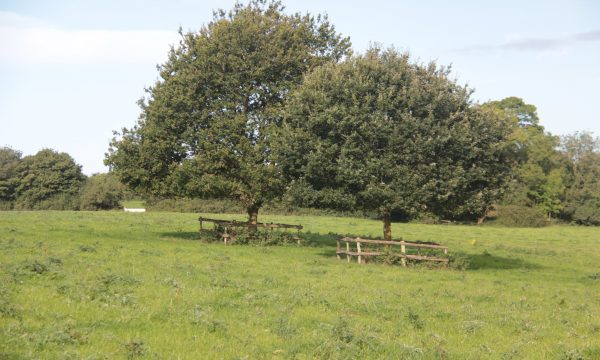 bomen weiland UK