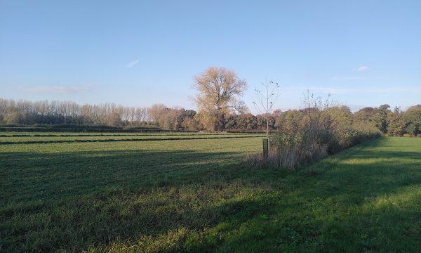 field at PHAE