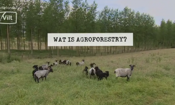 Thumbnail uitgespit - agroforestry