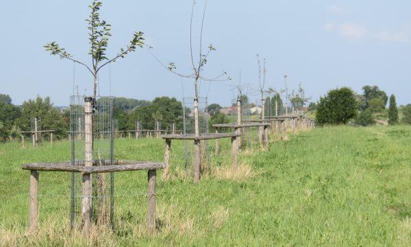 fruitbomen met bescherming