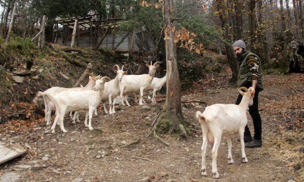 agroforestry Sardinia