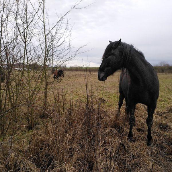 Paard in natuurlijke habitat