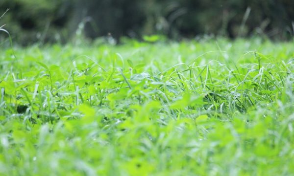 picture grass