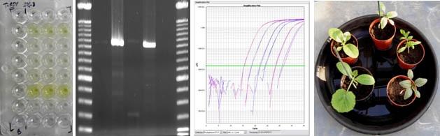 Output diagnostic tests