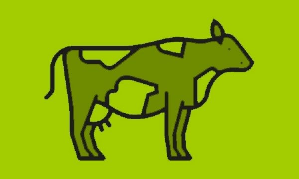 Icoon koe