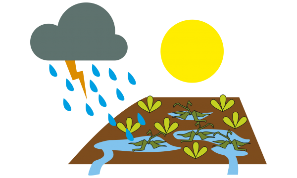 Sun, rain and too much water on a field