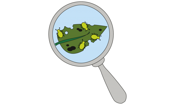 Magnifying glass looking at bugs on a plant