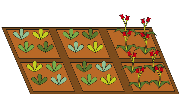 drawing of plots with different plants on them