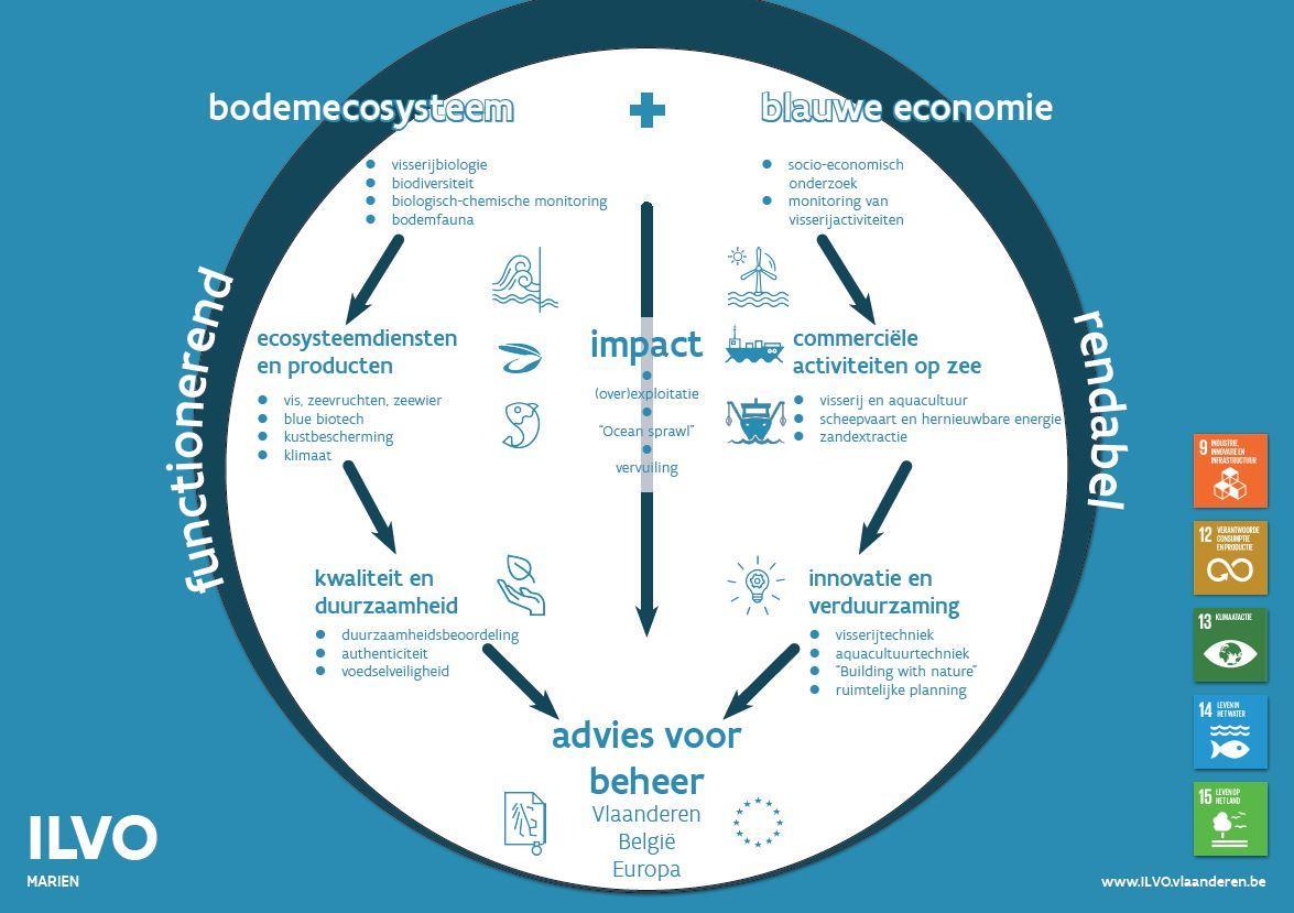 Schematische voorstelling van het marien onderzoeksprogramma van ILVO