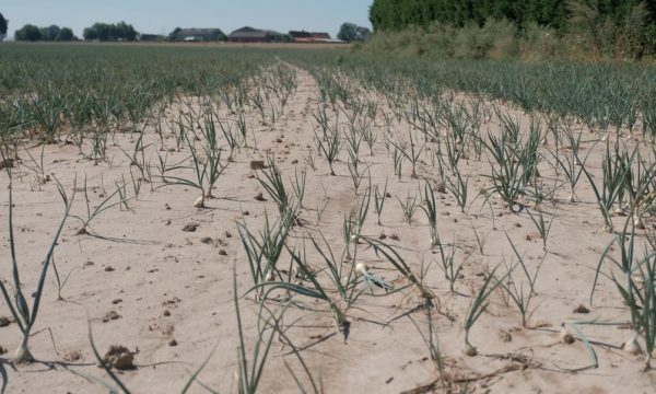 Veld te lijden onder droogte