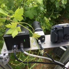 Sensors pointing at grapevine