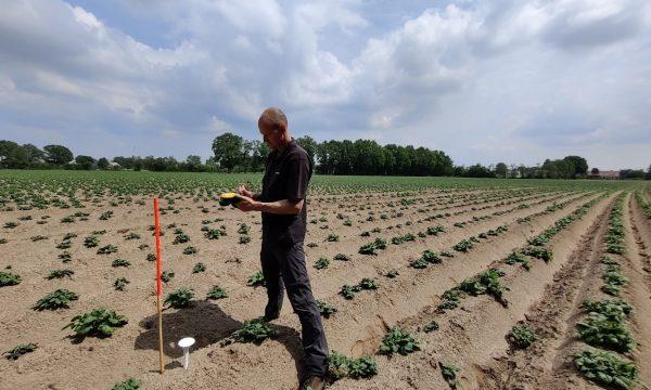 Sensor aardappelveld