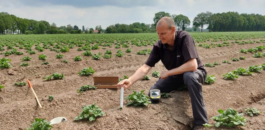 person installing sensor among young potato plants in a field