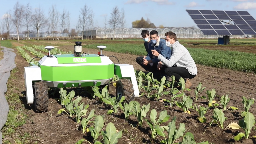 Robot rolling over rows of lettuce plants
