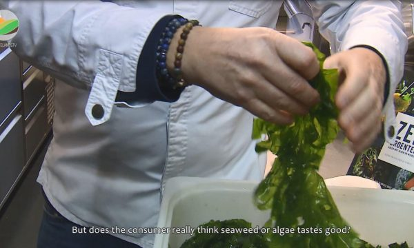 seaweed chef holding seaweed (screengrab from documentary)