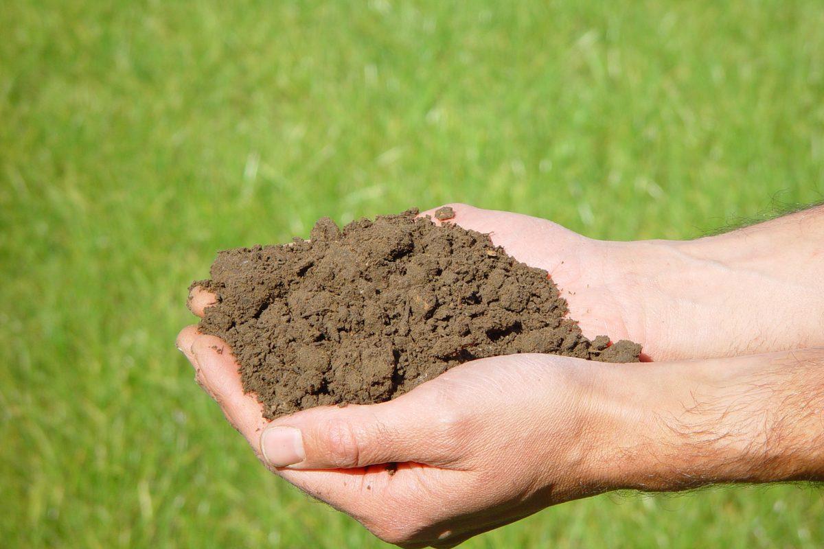 Een handvol rijpe en volledig verteerde compost