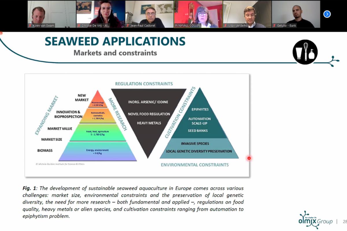 screenshot slide seaweed applications