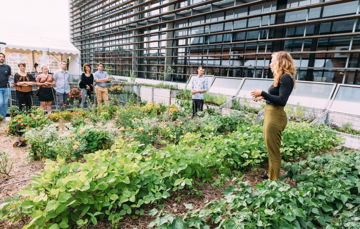 Rows of plants growing on a rooftop; a woman explains to a group