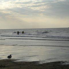 Een meeuw op het strand en 2 personen in de zee