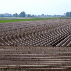 field with ridges
