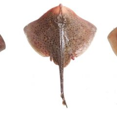 3 soorten roggen op een rij