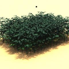 3D growth model