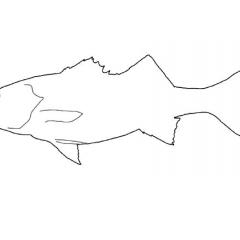 silhouette van zeebaars
