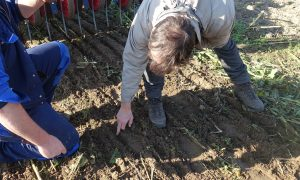 Two men inspect soil after non-inversion tillage is applied