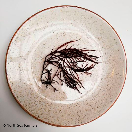 brown seaweed on a plate