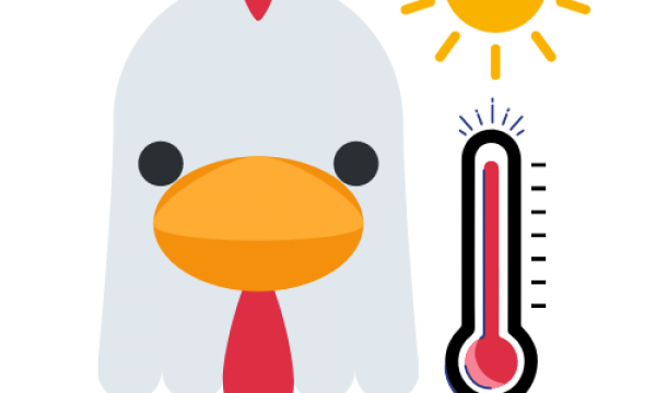 logo of coolchicks project cartoon chicken with thermometer and sun
