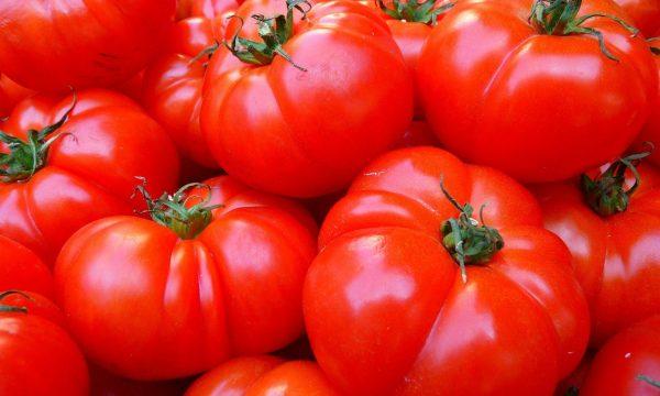 close-up van grote tomaten, geplukt