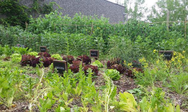 dakmoestuin met groenten en naamplaatjes per gewas