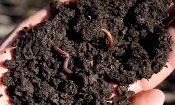 Een handvol bodem met een regenworm