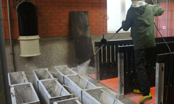 The use of disinfectants in the livestock shed