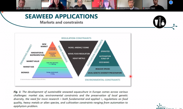 "screenshot webinar met slide over ""seaweed applications"""