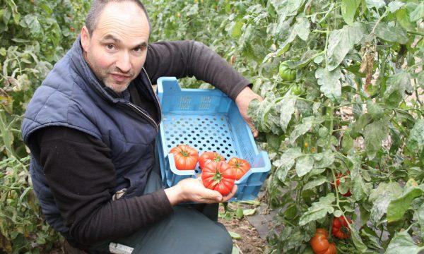 Boer met tomaten