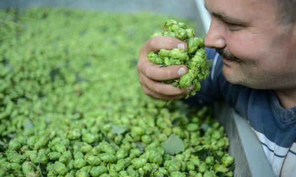 Smelling hop