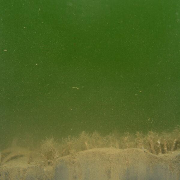 Onderwaterbeeld met een doorsnede van de zeebodem. Er zijn drie zones zichtbaar: bovenaan zeewater, in het midden het zeebodemoppervlak met schelpkokerwormen, en onderaan zand in de zeebodem