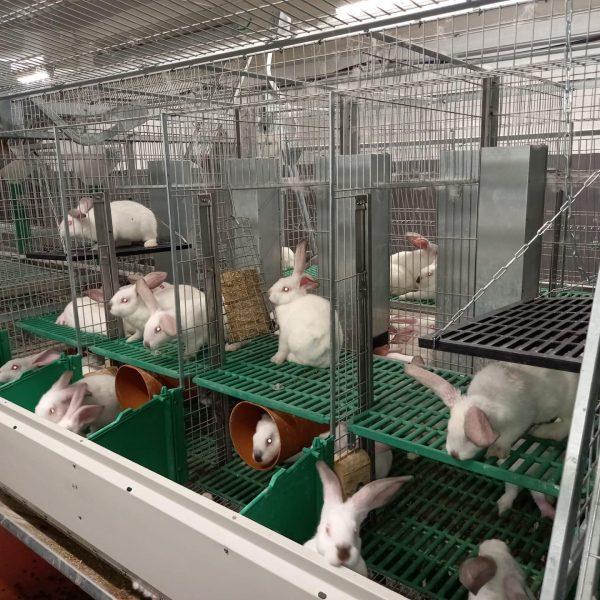 huisvesting in een konijnenkwekerij