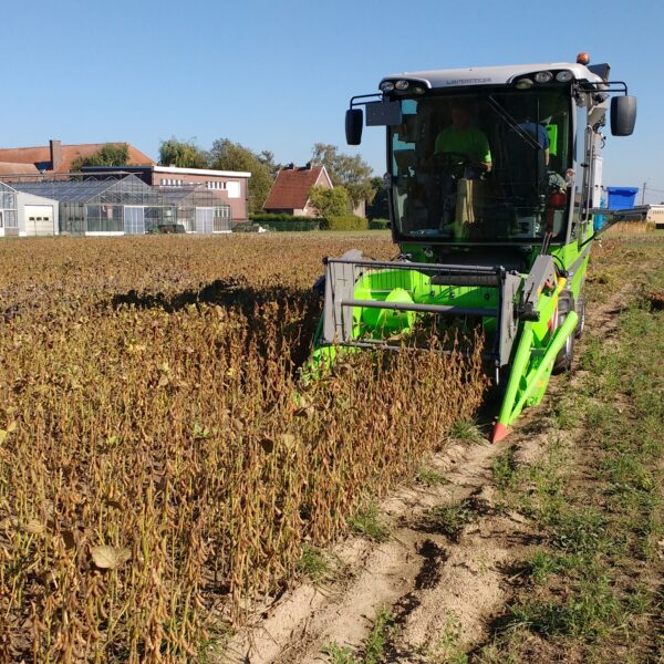 tractor harvesting soy on a farm