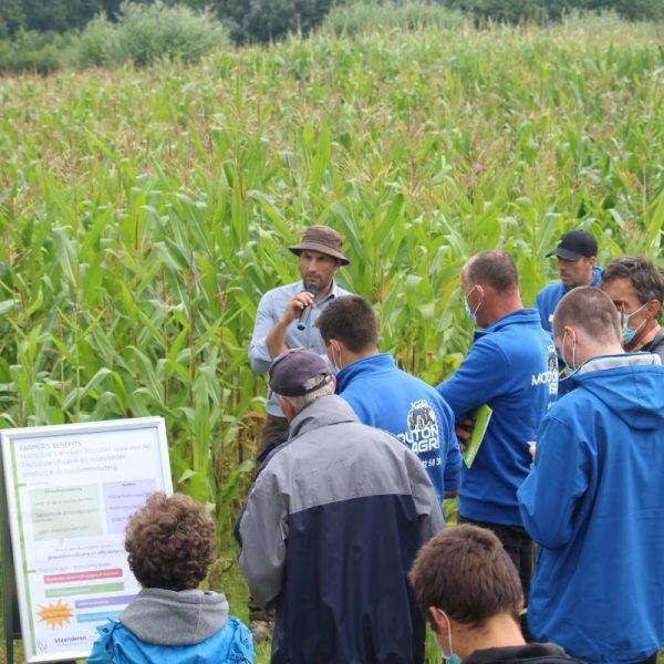 Landbouwers luisteren en kijken bij een veld met mengteelt kuilmais-klimboon