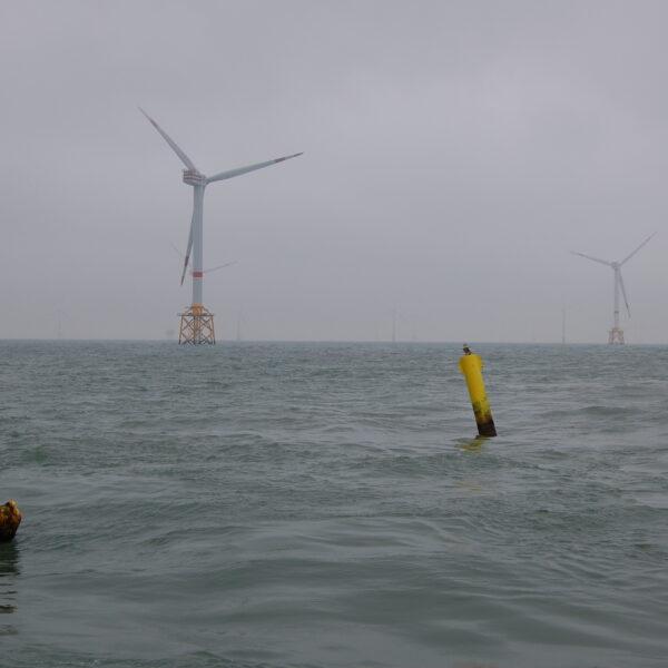 Beeld van de Noordzee, met op de achtergrond windturbines en op de voorgrond de boeien van een aquacultuurinstallatie.