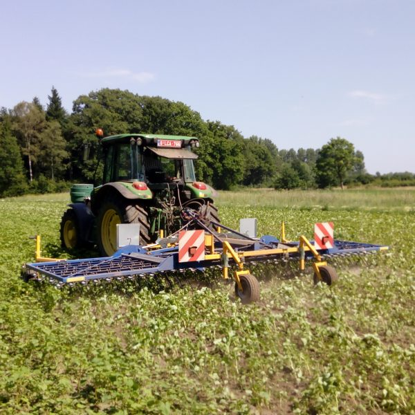 Weeding machine in a field of buckwheat