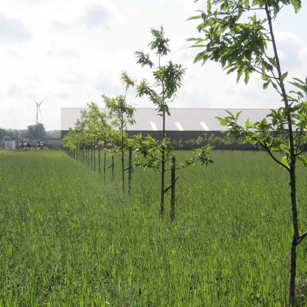 Saplings in a field
