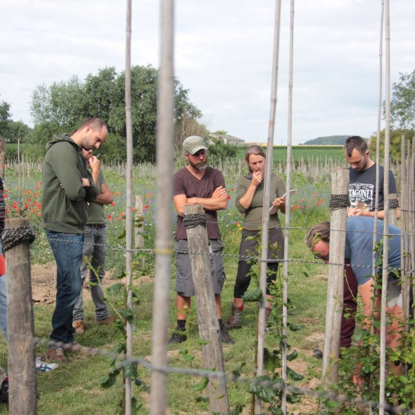 Explanation of agroforestry principles in the field