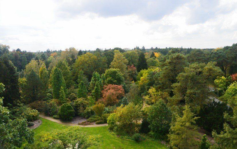 Arboretum bokrijk.