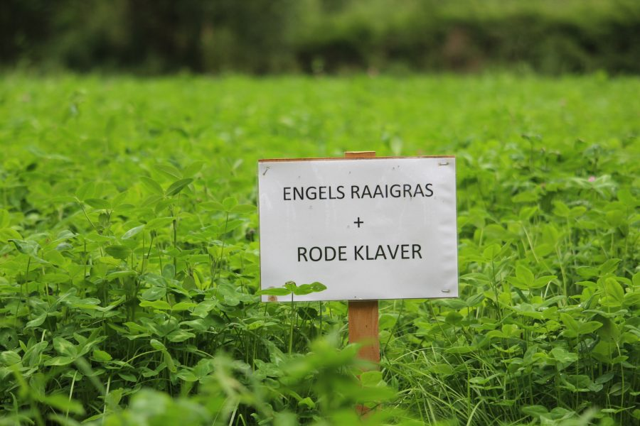 sign of english ryegrass and clover